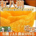 【2017年2月末頃より収穫スタート】JAS法に準拠して作られた柑橘類『紅八朔』5kg