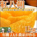 【2017年2月収穫スタート】 JAS法に準拠して作られた柑橘類『紅八朔』1kg(2〜4個)
