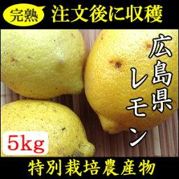 【特別栽培】注文うけてから収穫します!完熟広島国産訳ありレモン5kg