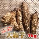 こだわりのステビア・米ぬか農法で作られた大和芋の右に出るモノなし!粘りとコクが自慢!食育素材の大和芋(1kg)