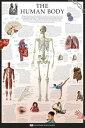 ポスター The Human Body - Dorling 人間の体 PPS-101 インテリアグッズ POSTER 通販 【プレゼント】【あす楽】ベルコモン