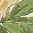 壁紙 クロス English Garden サンゲツエクセレクトsg-6252(巾52cm) 輸入壁紙イギリス