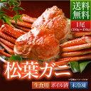 贈答品 送料無料 鳥取県 境港産 ボイル 松葉カニ 蟹 A級 1尾(350g〜450g)【松葉ガニ350A1尾】