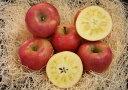 【お歳暮】【ギフト】青森りんご 蜜たっぷり!! こみつ7個(化粧箱)※只今、好評販売中です。