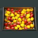 【送料無料】宮城県 フルーツのような彩りミニトマト