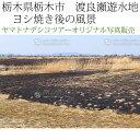 日本紀行 栃木県栃木市 渡良瀬遊水地 ヨシ焼き後の風景 (nk09-170320-6d-206) 当