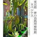 日本紀行 東京都 夢の島熱帯植物館 食虫植物 ネペンテス (nk13-160707-133) 当店オリジナル写真販売 Photo frame, Yumenoshima Tropical plants Museum