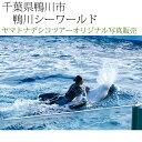 日本紀行 千葉県鴨川市 鴨川シーワールド (nk12-171112-41) 当店オリジナル写真販売 Original photograph, Kamogawa Sea World