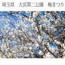 インテリア写真額縁 大宮第二公園 梅まつり1 埼玉県さいたま市 当店オリジナル写真パネル オフィス・