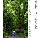 日本紀行 東京都 明治神宮の森 (nk13-9152) 当店オリジナル写真販売 Photo frame, Meiji jingu