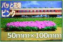 パッと置くだけで簡単 ピンクのお花畑が出来上がり!Nゲージ・鉄道模型のレイアウト・ジオラマに!カラースポンジシーナリー 植栽住宅模型・建築模型にも