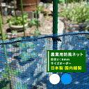 [8%OFFクーポン配布中×楽天マ...