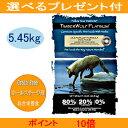 【予約受付中】ティンバーウルフ・プラチナム (オーシャンブルー・プラチナム) 5.45kg 【選べるプレゼント付】