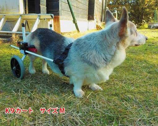 【試乗車あり】犬の車椅子 K9カートスタンダード後脚サポート M(11.1〜18kg)用 介護用品 老犬 高齢犬 わんケア 犬用 車椅子 車いす カート 中型犬 車椅子 バギー 後肢 後足 歩行器 コーギー ビーグル犬 介護 老犬 高齢犬 ペット リハビリ