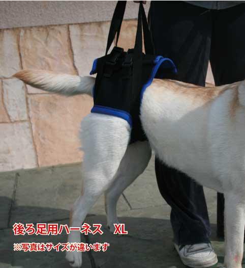 歩行補助ハーネス(後足用) XL(胴周り74-90cm) 【ウォークアバウト】 ペット 介護用品【送料無料】 老犬 高齢犬 わんケア 【大型犬用介護用品】ペットグッズ 後肢 後脚   P11Sep16 足腰の弱った犬を支える歩行補助ハーネス