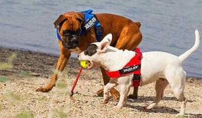 ハーネス小型犬中型犬犬犬用胴輪【Julius-K9】ユリウスケーナイン全3色IDC@ベルトハーネスMiniMini・Mini胸囲40~65cm犬用ハーネスお揃いのリードあります♪(別売)[メール便不可]