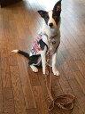 元祖 スリーポイントリード 幅約1cmの中型犬用【レザー ポリスリード】イギリスで一人の職人さんが作