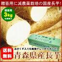 【送料無料】減農薬栽培の特選ながいも『青森県産まほろば長芋:贈答用2Lサイズ』3kg[※破損防止・保存用としておがくず詰め]