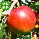 【送料無料】青森県産りんご紅玉加工用訳あり品約5kg[バラ入り・さび・黒ほし・色むら・枝傷有・輸送時