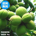 青森県産青梅 SMサイズ混合 5kg(品種:豊後梅)【クール冷蔵便送料無料】
