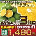 【みかん3kg】1,480円!2セット購入で+1kg増量★温...