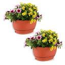 T4U 22cm プラスチック 壁掛け鉢 植木鉢 プランター ハンギング鉢 観葉植物適用 受け皿付き レッド 2点入り L:幅広さ22cm