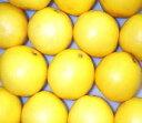 ホワイトグレープフルーツS24個/約8kg/50サイズ