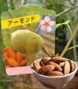 【木】アーモンドの木【5号】 Almond5号 Prunus dulcis【ギフト】
