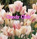 嬉しい不思議♪♪枝咲きチューリップ♪ キャンディー クラブ 10球Tulip【秋植え球根 桃花】