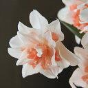 芽出し球根 八重咲きサーモンピンクの水仙 リプリート 1球植え1鉢 Narcissus cv. Replete