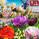 【秋植え 球根】チューリップ球根セット選べる全17セット【お届け中】原種チューリップ 八重咲きチューリップ 枝咲きリューリップ