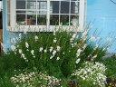 イングリッシュ ガーデン ガーデニング