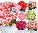 【クーポンでお得】【母の日 ギフト 鉢植え】大輪薔薇咲きリー...