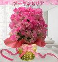 早割 母の日 花 鉢植え ギフト ブーゲンビリア 3種から選べる 5号籠 籠付きラッピング【母の日ギ