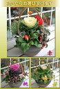【花ギフト】花でまり 和風 寄せ植え 8号鉢【お届け12