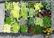セダム・ステップストーンタイプ 【多肉植物 苗】色とりどりのおまかせ6品種6ポットセット
