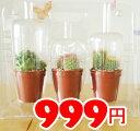 【IKEA】イケア通販【CACTACEAE】ミニサボテン 3ピースセット(種類は選べません)