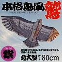 【バードカイトイーグル】大空に舞い上げよう♪超大型180cm鳥凧『鷲』パープル