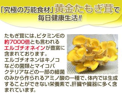 黄金たもぎ茸錠剤160mg×360錠