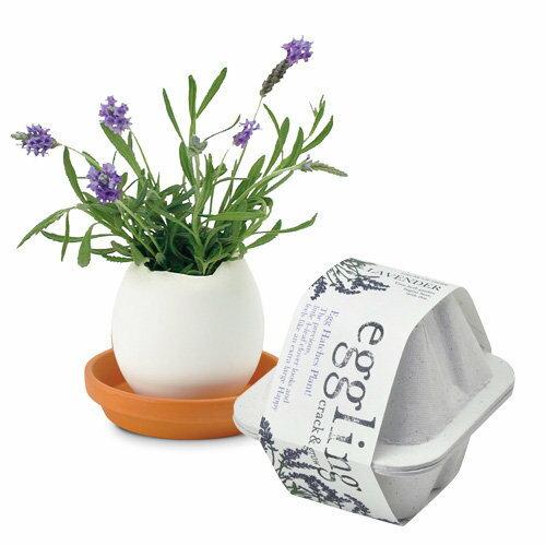 聖新陶芸エッグリングエコフレンドリーラベンダーガーデニング景品栽培セットギフトプチプラプレゼントグリ