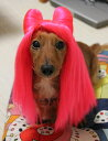 P-012_ne_hot_pink_f