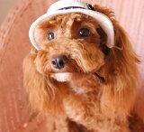 【犬の帽子 Garden of Eden】カンカン ハット (GE-068)