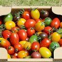 数量限定20%OFFクーポン ふくしまプライド ワンダーファーム ミニトマトミックス 1.7kg お取り寄せ 野菜 ギフト トマト