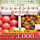 ワンダーファーム サンシャイントマト詰め合わせ お取り寄せ 野菜 ギフト トマト ミニトマト