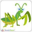【A11-A0004-1】mantis/かまきり/カマキリ♪ワンダーハウス*ダイ♪2枚組