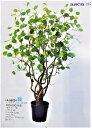 【人工観葉植物】【へーデルナッツツリー】170cm【送料無料】【代引き不可】