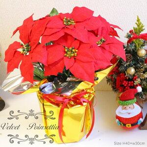 クリスマス ポインセチア アレンジメント