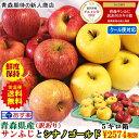 りんご 5kg 青森りんご 5キロ箱 家庭用 訳あり【クール...