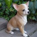 犬の置物 チワワ いぬ イヌ 動物 N2629 オーナメント ガーデン オブジェ 庭 雑貨 ガーデニング ガーデンマスコット