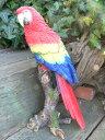 小鳥の置物 インコの置物 特大 N12141 とり オーナメント ガーデン インテリア 雑貨 置物 庭 ガーデンマスコット レジン 陶器